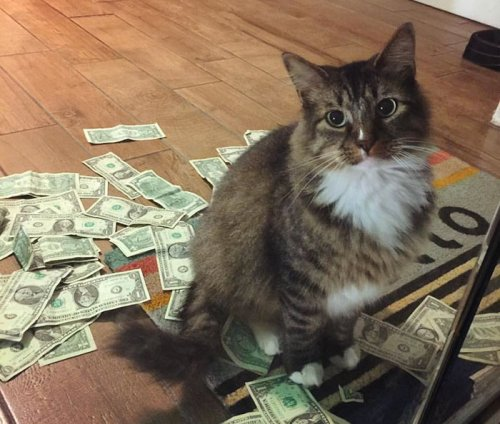 Кот, который отбирает у людей деньги на благотворительность