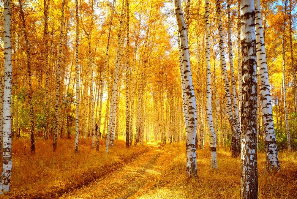 Яркие краски осенней природы