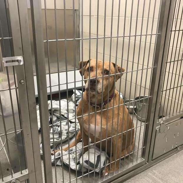 Владельцы пса обещали забрать его из приюта, но так и не пришли.