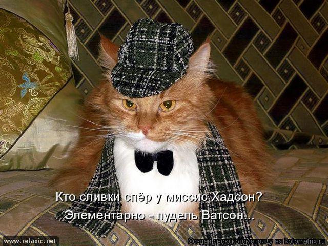 """Воскресная """"котоматрица"""""""