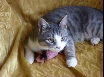 Вязаный мышонок для любимого питомца/Knitted mouse for your beloved pet