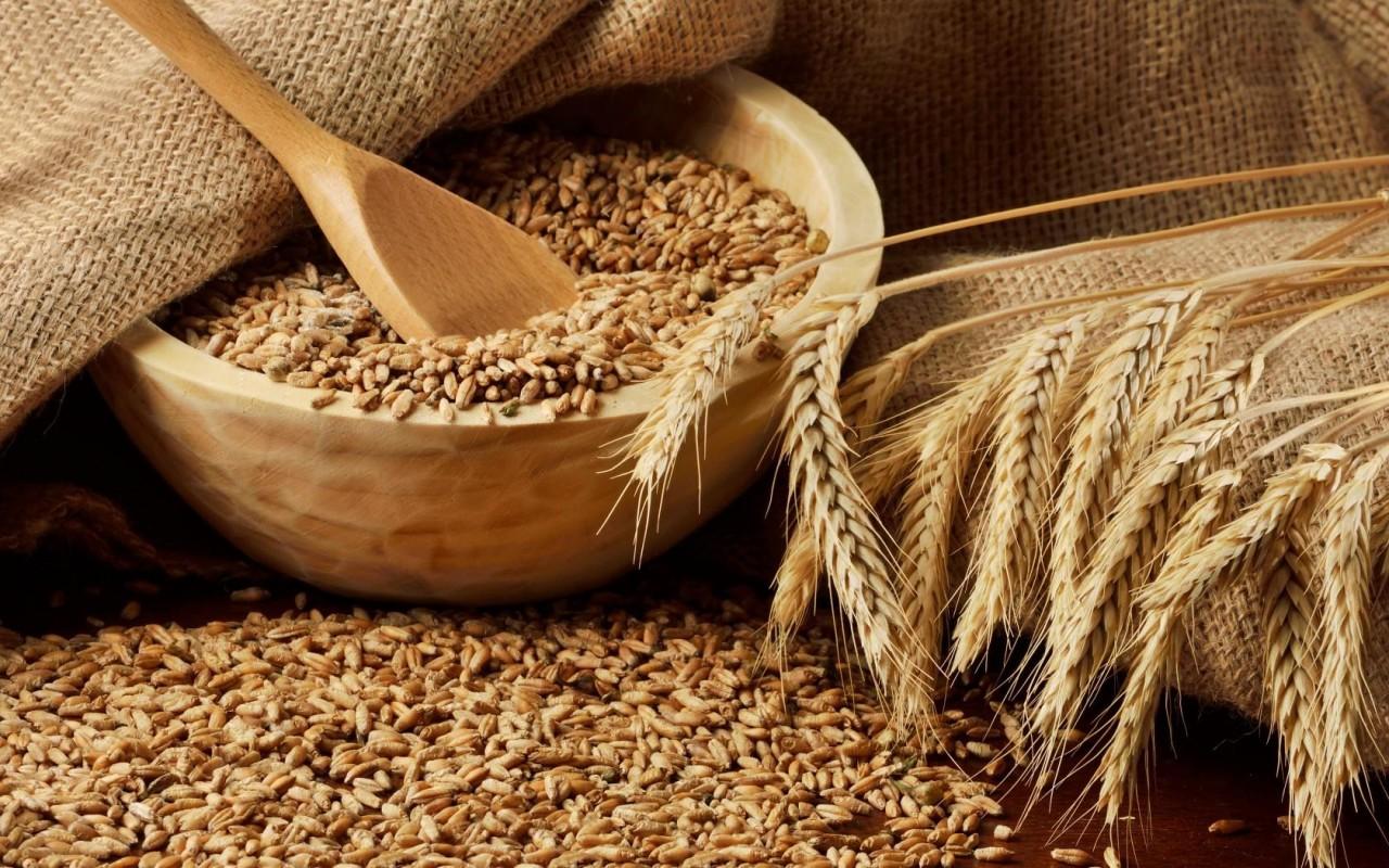 Фига гегемону. В Сирии создадут крупнейший хаб по экспорту российского зерна