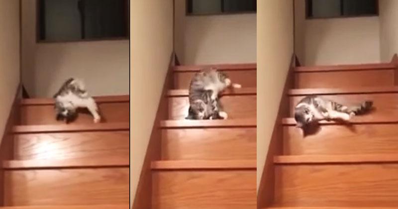 Это ли не самый ленивый кот, которого вы сегодня видели? Высшая степень лени!
