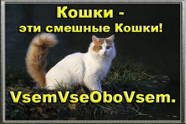 Кошки - эти смешные Кошки! VsemVseOboVsem.