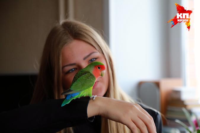 Попугай спасся из горящей многоэтажки и спустя несколько дней чудом вернулся домой