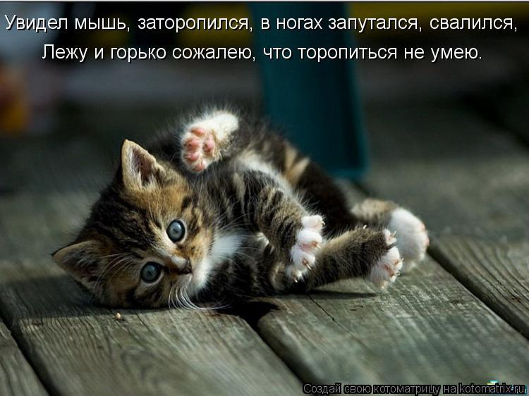 Котоматрица: Увидел мышь, заторопился, в ногах запутался, свалился, Лежу и горько сожалею, что торопиться не умею.