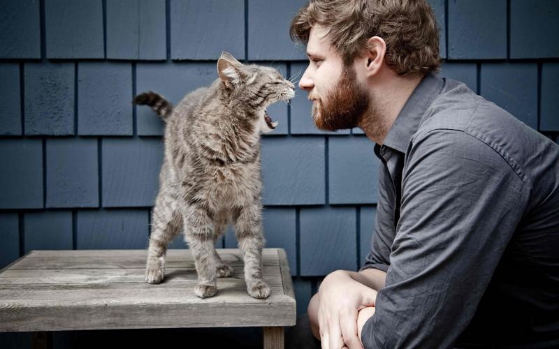 kitties24 30 способов использования котов в хозяйстве