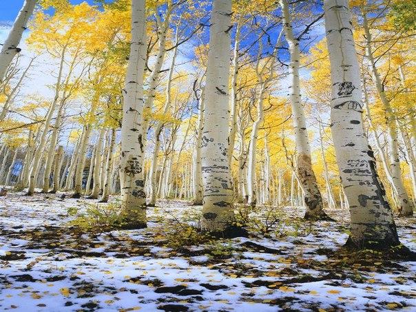 Сказочная природа зимней порой
