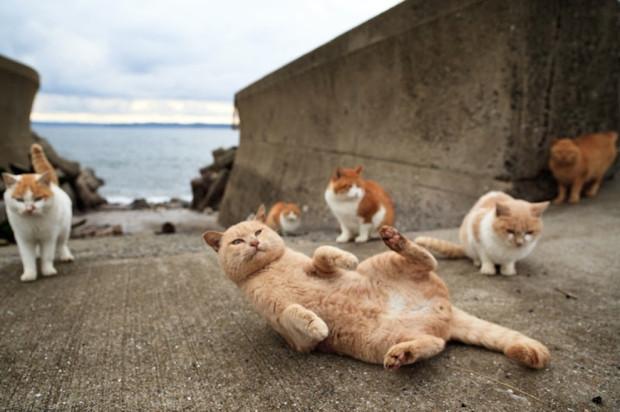 10 странных мест, появившихся благодаря обожанию кошек