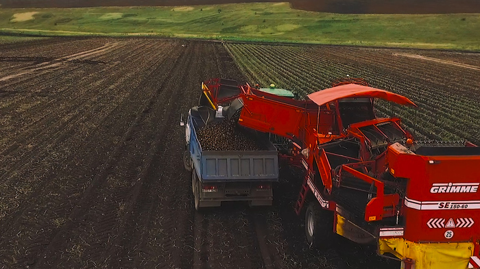 Да не треснет гребень! сельское хозяйство, картофель, технологии, импортозамещение, урожай, длиннопост