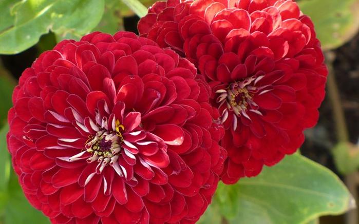 цвет, осени 24 (700x437, 342Kb)