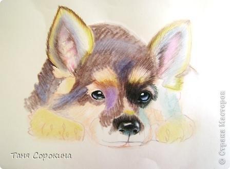 Картина панно рисунок Рисование и живопись Тренируюсь на щенках  Пастель фото 3