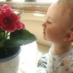 Каким растениям место в детской комнате.