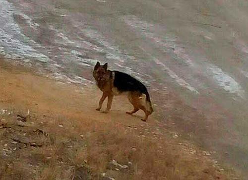 Встреча, как в кино! Челябинец случайно нашел свою собаку, потерявшуюся полгода назад