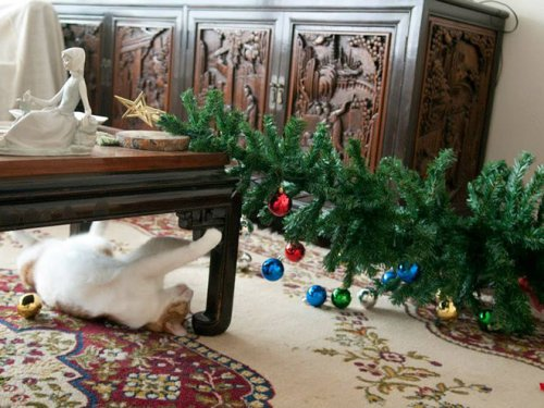 Четырёхлапые разрушители Рождества