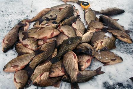 где в тамбове клюет рыба