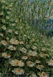 живопись цветы - Воспоминания о лете..209 - живопись мастихином.