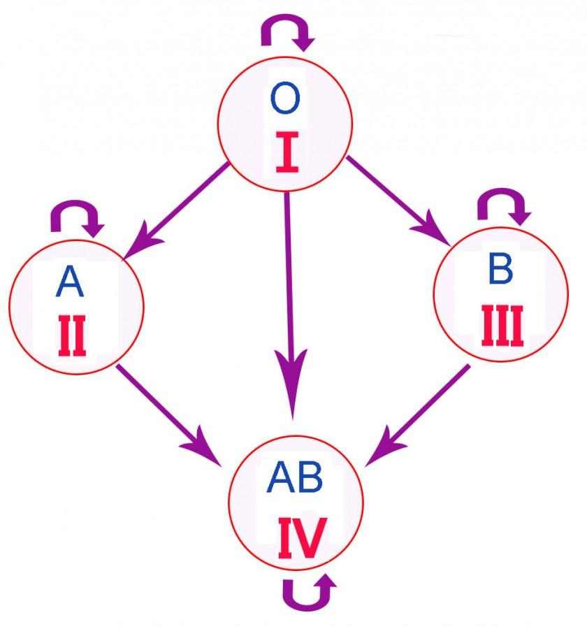Почему так важно знать группу крови?