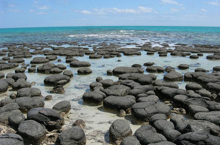 Строматолиты: живые камни