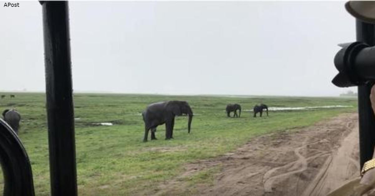 Вы когда-нибудь видели, как рождаются слоны?