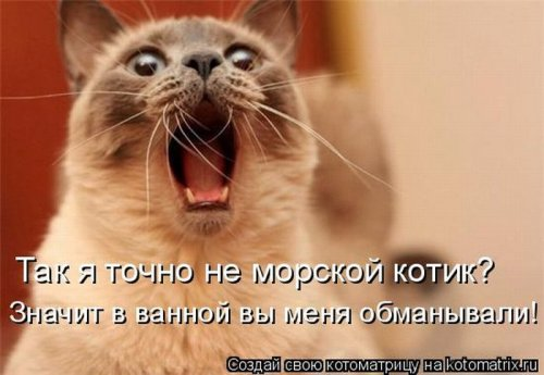 Сложно все (котоматрица) Original