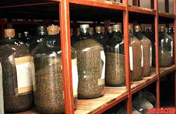 Сколько лет можно хранить семена