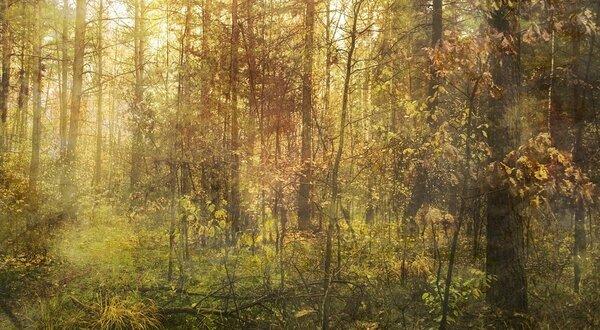 Как немецкие инженеры с нашими рабочими, казенный УАЗик сожгли нечаянно. 25 км пешком обратно шли по лесу.