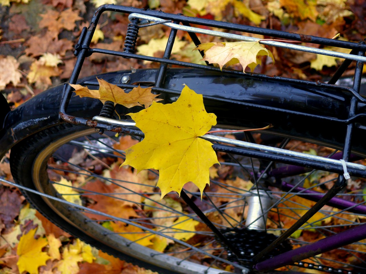 Амфетаминовая осень. Фельдшер — о галлюцинациях и переменах погоды