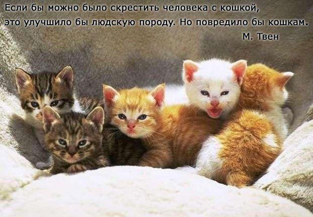 Лучшие афоризмы о кошках в картинках и...КОТОМАТРИЦА...