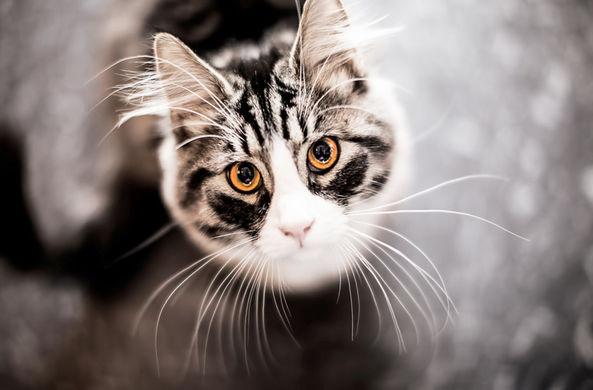 Итальянская компания создала умную миску для кошек