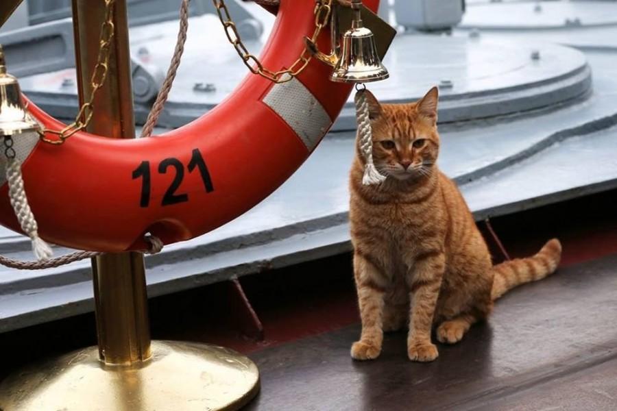 У ВМФ России появился боевой кот