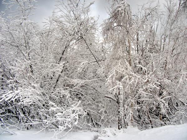 Южный Урал.Снежная буря !