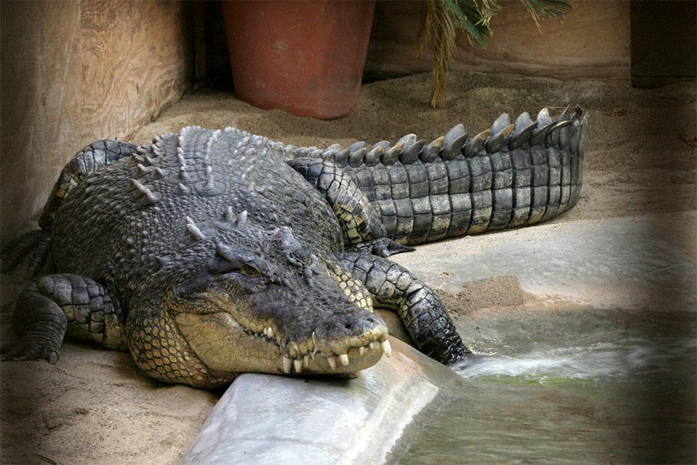 Самый большой крокодил в мире