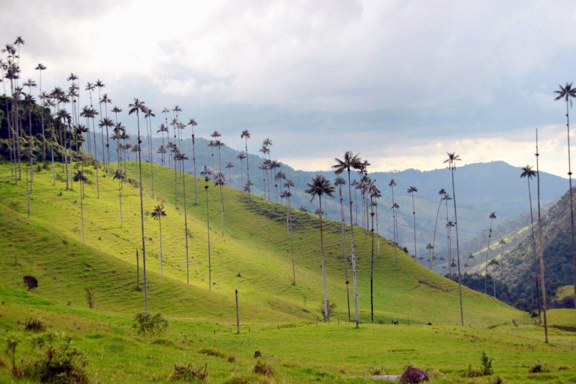 Долина самых высоких пальм.