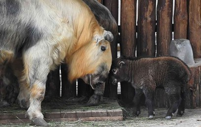 В Московском зоопарке родили…