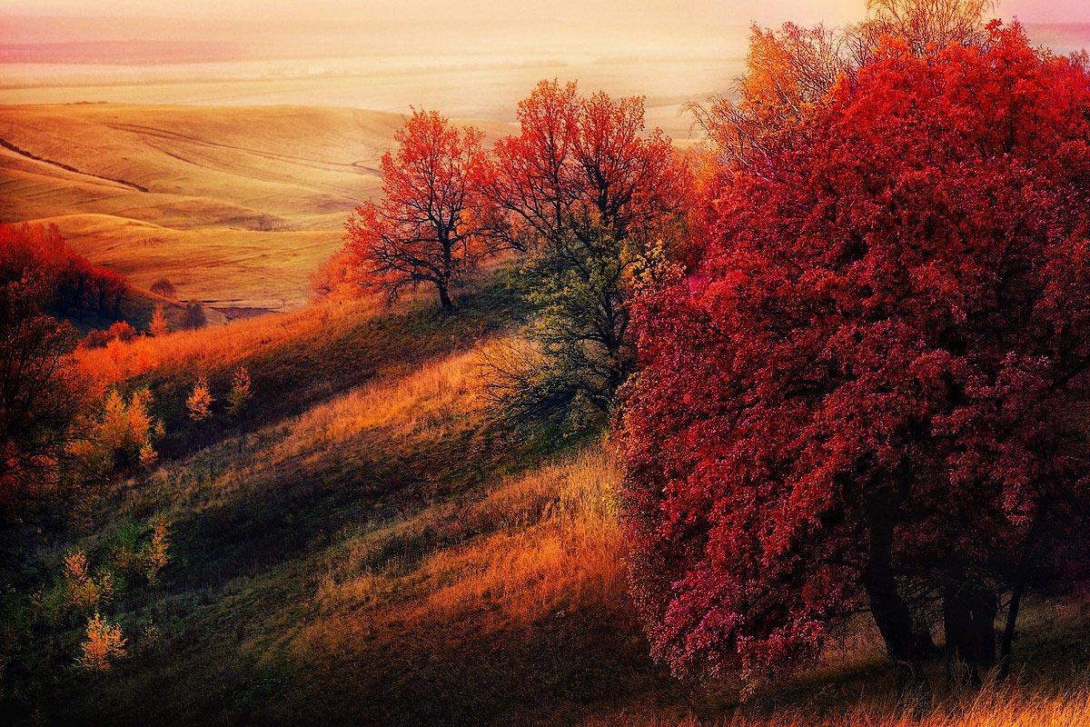 Картинки по запросу красная осень