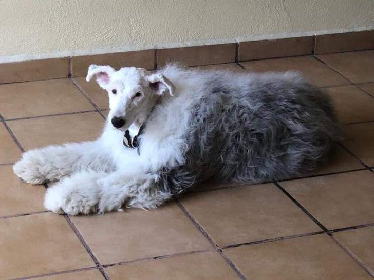 22 случая, когда стрижка преобразила животных донеузнаваемости