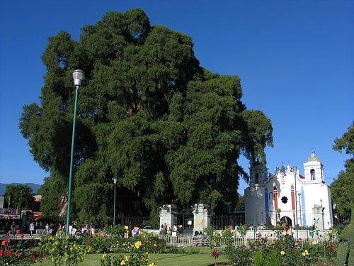 Деревья, которые удивляют: Рис.10