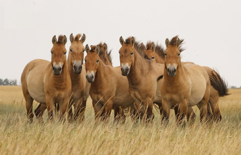 «История лошади» от генетиков