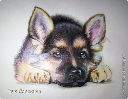 Картина панно рисунок Рисование и живопись Тренируюсь на щенках  Пастель фото 5