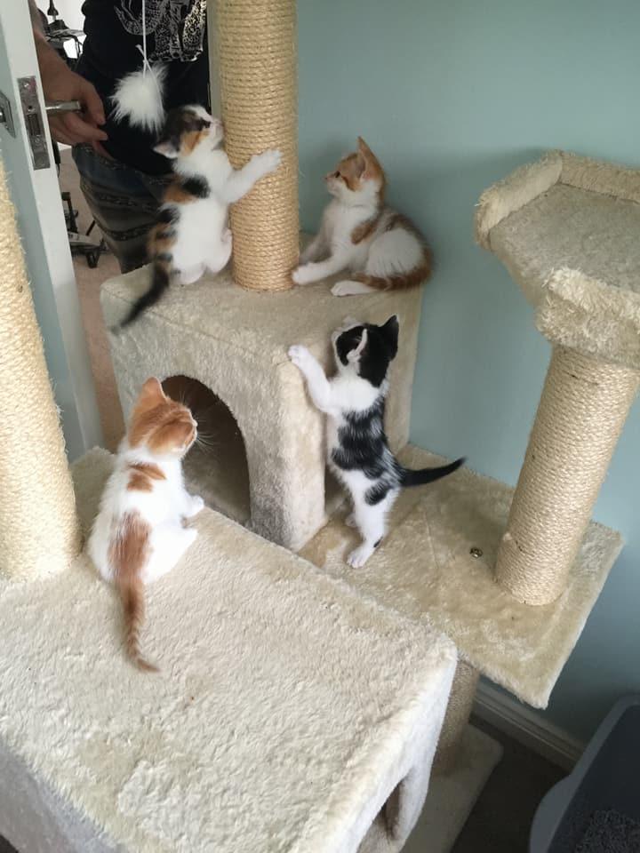 кошка выкормила пятерых котят без еды