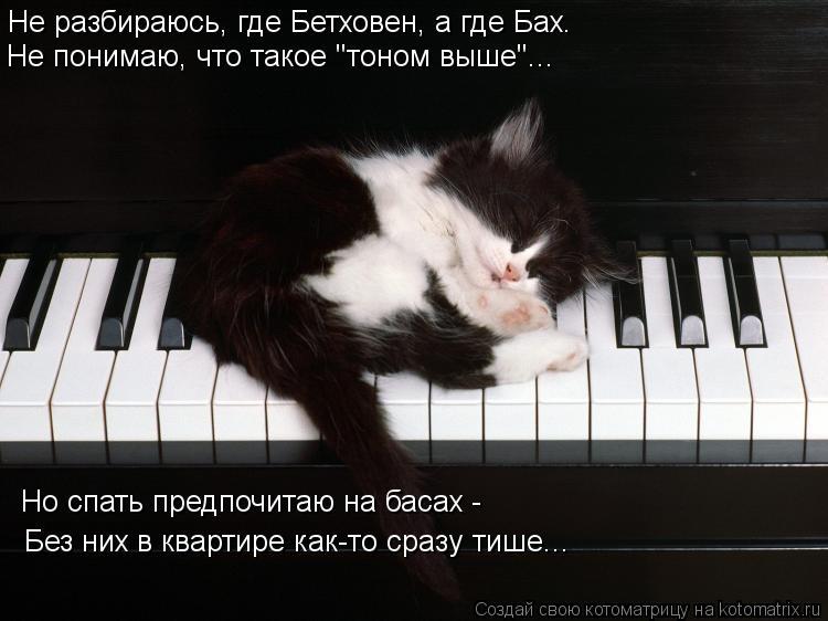 Котоматрица: Не разбираюсь, где Бетховен, а где Бах.  <div id=