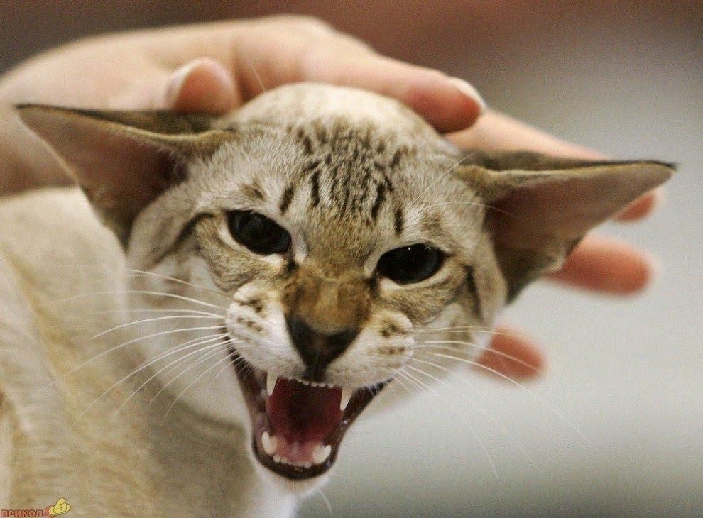 Коты приколы смешно до слез с надписями