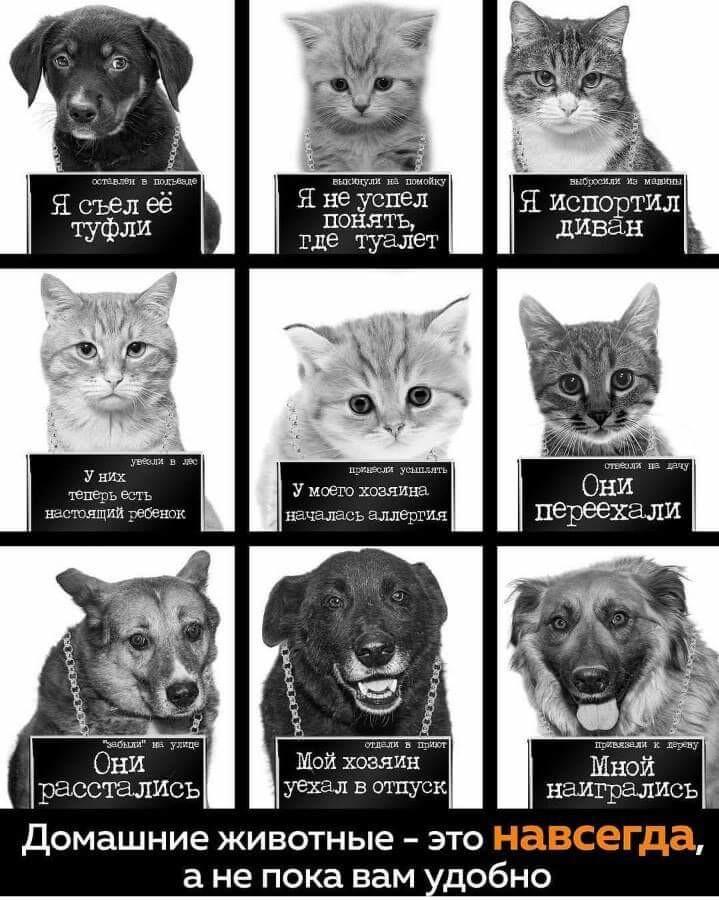 Помогите российским животным…