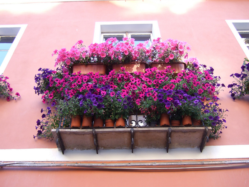 Цветочные балконы и окна