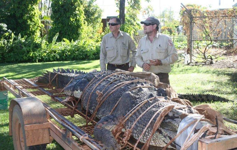 Австралийские рейнджеры поймали крокодила весом в 600 кг