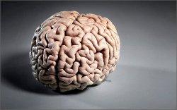 За что отвечает левое и правое полушарие головного мозга. Левши и правши