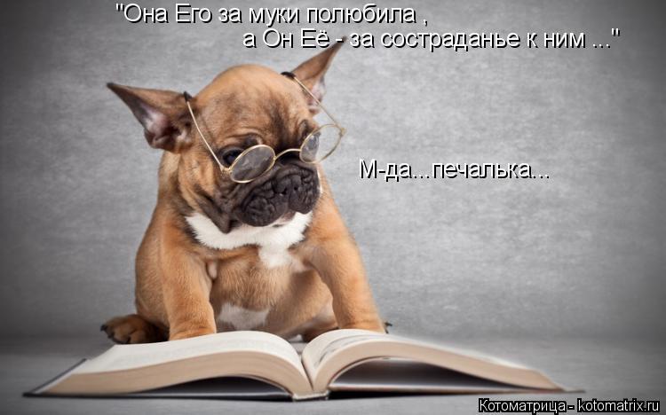 Нейрофизиологи подтвердили, что собаки понимают отдельные слова