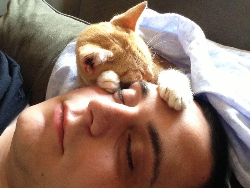 CatsGoldenHearts22 Почему мы любим кошек