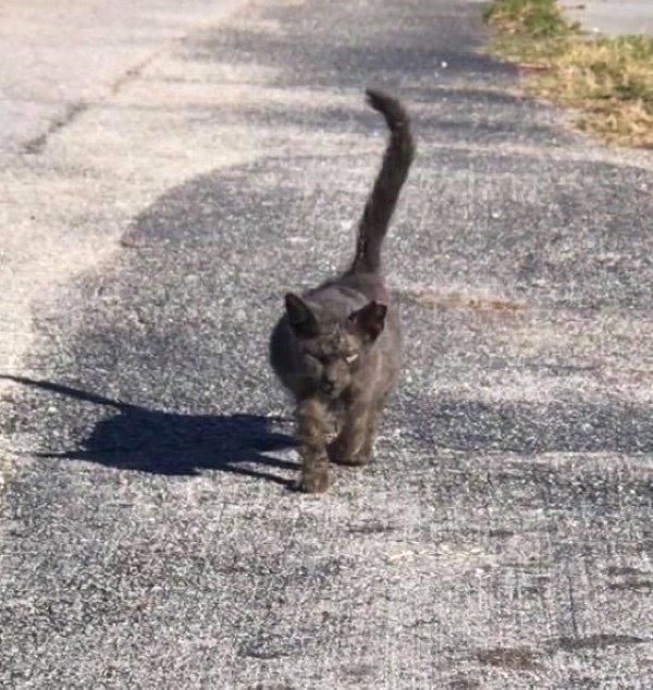 Кошка с большим животом вразвалочку шла навстречу девушке… Но беременной она не была, хотя и нуждалась в помощи